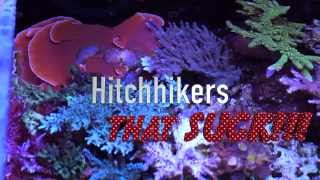 Download Top 5 Pests in Reef Aquariums Video
