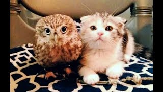 Download Kitten And Baby Owl Meet For The First Time And Their Next Move Is Too Much For Words Video