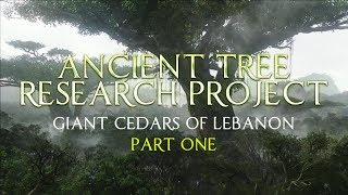 Download Ancient Tree Research Project | Giant Cedars of Lebanon - Part 1 Video