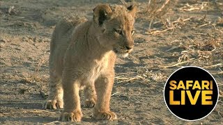 Download safariLIVE - Sunrise Safari - September 04, 2019 Video