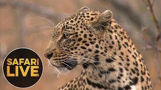 Download safariLIVE - Sunrise Safari - August 15, 2018 Video