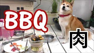 Download 柴犬小春 崩壊寸前!七輪で待望の焼肉!!【ASMR】 Video