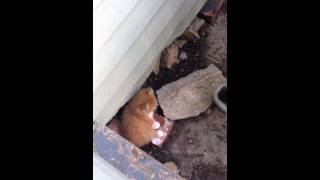 Download Catching a Scared Kitten Video