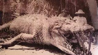 Download Top Biggest Crocodile Ever Caught Video