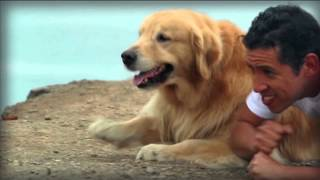 Download Perrotón® Dog Chow 2015 Video