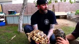Download Turtles, Tortoises and Chuckwallas, oh my! Kamp Kenan S1 Episode 22 Video