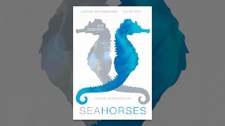 Download Seahorses Video