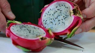 Download When is it ripe? Dragon Fruit Video