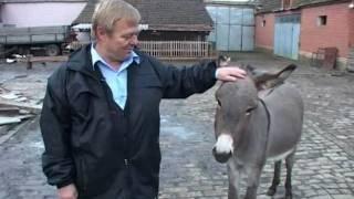Download Farma virtenberg ovaca u Tomasevcu - U nasem ataru 365. Video