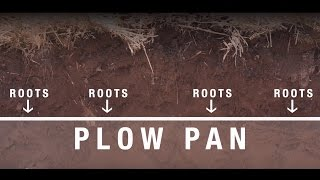 Download Healthy soil for healthy plants and environment: Agronomy feeds the world Video