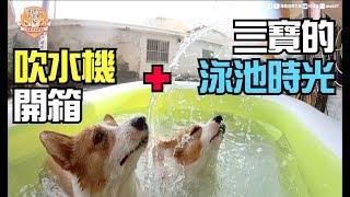 Download [連環泡]三寶玩水記+狗生第一次的吹水機開箱 Video