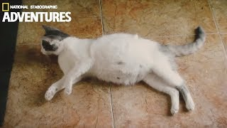 Download Pregnant Cat Giving Birth to 6 Kittens Video