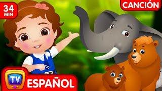 Download Vamos a ir al bosque (Colección) - Animales Salvajes   Canciones Infantiles Populares de ChuChu TV Video