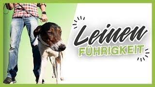 Download LEINENFÜHRIGKEIT ▶︎ 3 einfache Tipps wie es dein Hund schnell lernt Video