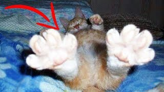 Download Top 10 Weird CAT BEHAVIORS Explained Video
