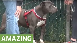 Download Crying dog at shelter finds new home Video