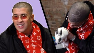 Download Bad Bunny Gets Surprised With Bunnies (While Answering Fan Questions) Video