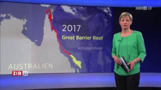 Download Great Barrier Reef: Korallen bleichen aus ORF ZIB 1 Video