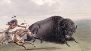 Download Buffalo Holocaust - Bison Genocide (30 million animals killed) Video