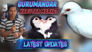 Download Guru Mandir pigeon Kabutar Market 25-3-2018 Latest Update Jamshed Asmi Informative Channel Video