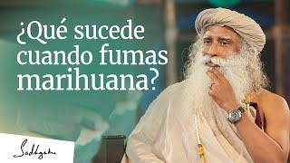 Download ¿Qué sucede cuando fumas marihuana? │Sadhguru Video