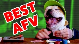 Download ☺ AFV (NEW!) Stupid Stunts & Funniest Moments of 2016 (Funny Clips Fail Montage) Video