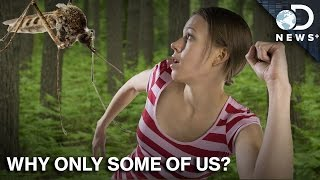 Download Why Do Mosquitoes Bite Some People and Not Others? Video