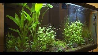 Download Zakládáme akvárium Video