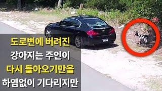 Download 도로변에 버려진 강아지, 그 자리에서 하염없이 주인을 기다리지만.. Video