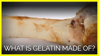 Download Gelatin Is Made From Animal Body Parts Video