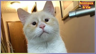 Download Elle se rend dans un refuge pour adopter un chat, quelques temps après elle prend une décision... Video