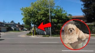 Download BENJEE FLEW OUT OUR CAR WINDOW!!! (SO SCARY) Video
