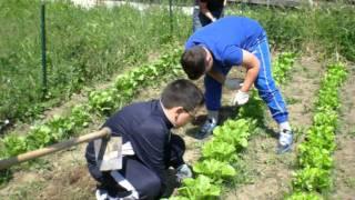 Download L'orto a scuola 2 Video