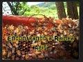 Download Encontrar a Rainha com Facilidade. Abelha-Apis.! Video