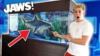 Download MEET MY NEW GIANT PET SHARK!! Video