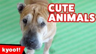Download The Funniest Cute Pets & Animals Reactions & Bloopers of 2016 Weekly Comp | Kyoot Animals Video