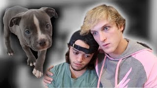 Download Evan's dog died... Video