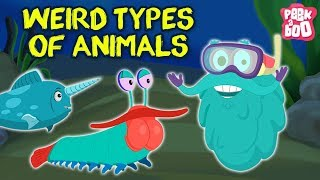 Download Weird Animals In The World - The Dr. Binocs Show | Best Learning Videos For Kids | Dr Binocs Video