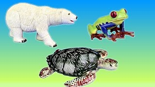 Download Wild Zoo Animal Educational Toys │Learning Animals Videos For Kids Video