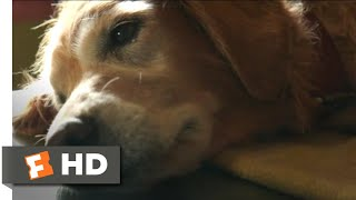 Download A Dog's Purpose (2017) - Bailey Passes On Scene (4/10) | Movieclips Video