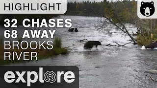 Download Bear 32 Chases 68 - Katmai National Park - Live Cam Highlight Video