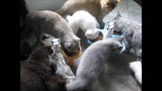 Download Probiotique pour chats baci+ - Probiotics baci+ for cats Video
