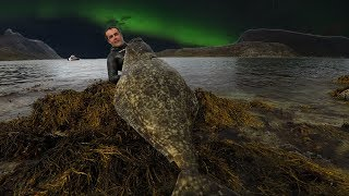 Download Spearfishing Giant Atlantic HALIBUT in Norway Video