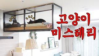 Download 고양이들은 저 높은 천장 선반에 대체 어떻게 올라간걸까? Video