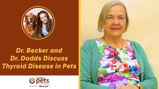 Download Dr. Becker and Dr. Dodds Discuss Thyroid Disease in Pets Video