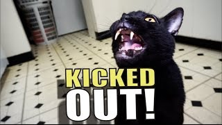 Download Talking Kitty Cat 51 - Kicked Out! Video