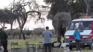 Download Dancing with Bull Elephant Video
