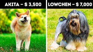 Download 20 Expensive Dogs Only 1% Can Afford Video