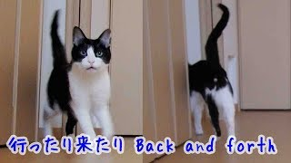 Download 二人が別々の場所から帰って来たら猫のお迎えはどうなるの?Cat Welcomeow Dad and Mom. Video