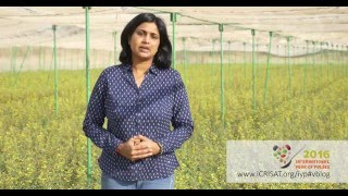 Download International Year of Pulses 2016 (Insights from Dr Anupama, Hingane, ICRISAT) Video